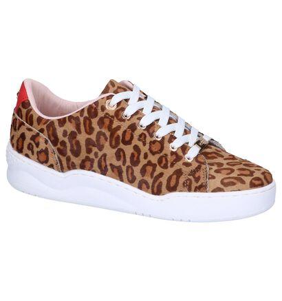 Mexx Chaussures à lacets  (Marron), Marron, pdp