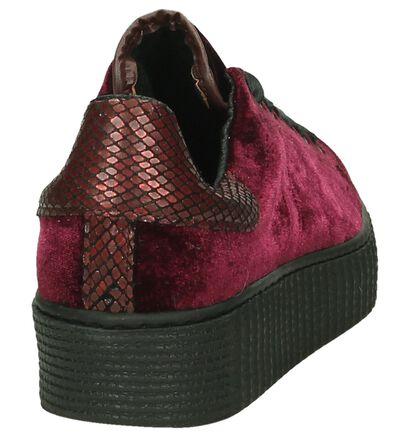 Tango Baskets basses en Bordeaux en textile (198424)